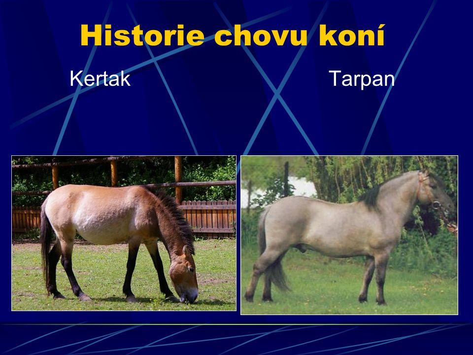 Historie chovu koní Kertak Tarpan