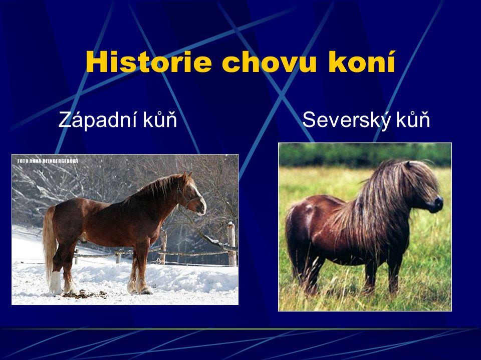 Historie chovu koní Západní kůň Severský kůň