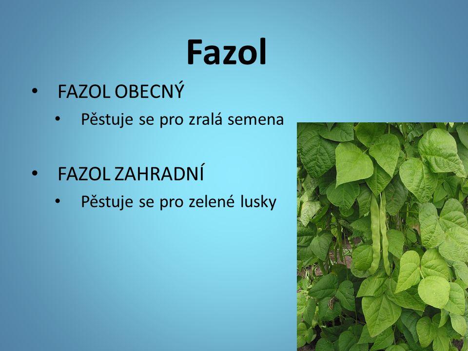 Fazol FAZOL OBECNÝ Pěstuje se pro zralá semena FAZOL ZAHRADNÍ Pěstuje se pro zelené lusky
