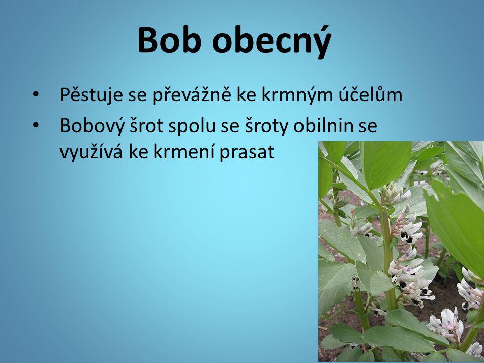 Bob obecný Pěstuje se převážně ke krmným účelům Bobový šrot spolu se šroty obilnin se využívá ke krmení prasat