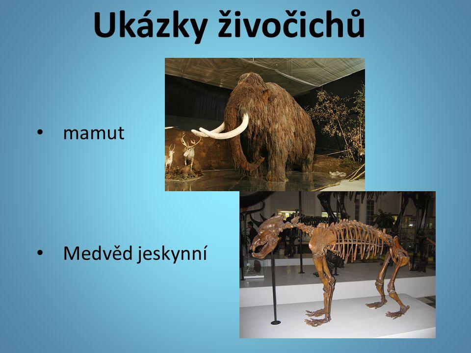 Ukázky živočichů mamut Medvěd jeskynní