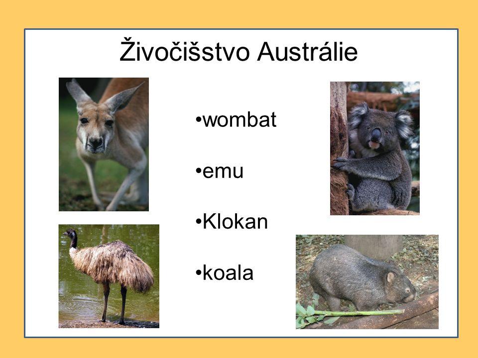 Živočišstvo Austrálie wombat emu Klokan koala