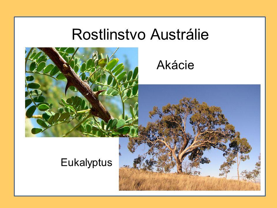 Rostlinstvo Austrálie Akácie Eukalyptus