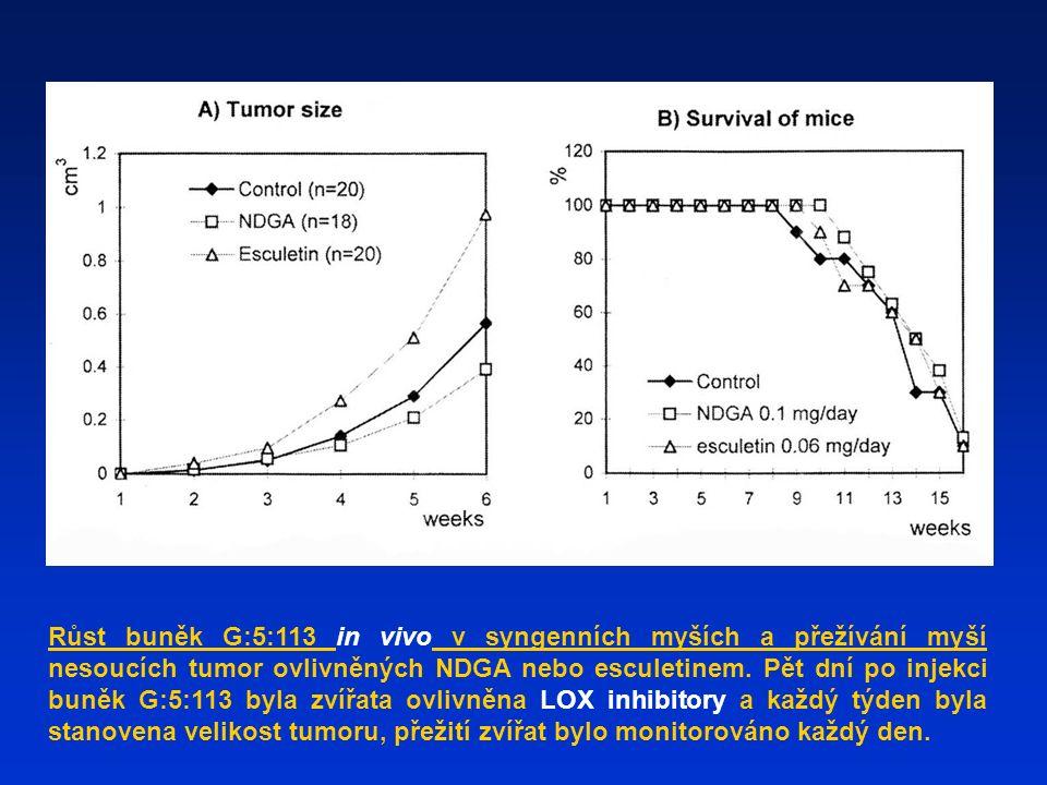 Růst buněk G:5:113 in vivo v syngenních myších a přežívání myší nesoucích tumor ovlivněných NDGA nebo esculetinem.