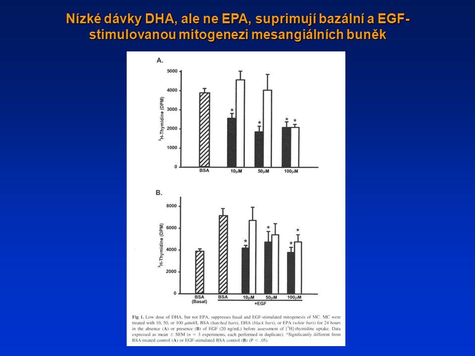 Nízké dávky DHA, ale ne EPA, suprimují bazální a EGF- stimulovanou mitogenezi mesangiálních buněk