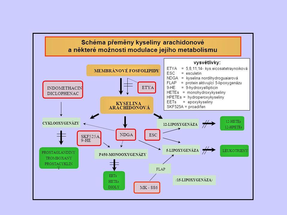 KYSELINA ARACHIDONOVÁ MEMBRÁNOVÉ FOSFOLIPIDY INDOMETHACIN DICLOPHENAC MK - 886 NDGA ESC 5-LIPOXYGENÁZA CYKLOOXYGENÁZY 12-LIPOXYGENÁZA P450-MONOOXYGENÁZY FLAP Schéma přeměny kyseliny arachidonové a některé možnosti modulace jejího metabolismu vysvětlivky: ETYA = 5,8,11,14- kys.eicosatetraynoiková ESC = esculetin NDGA = kyselina nordihydroguaiarová FLAP = protein aktivující 5-lipoxygenázu 9-HE = 9-hydroxyellipticin HETEs = monohydroxykyseliny HPETEs = hydroperoxykyseliny EETs = epoxykyseliny SKF525A = proadifen SKF525A, 9-HE ETYA PROSTAGLANDINY TROMBOXANY PROSTACYKLIN Y 12-HETEs 12-HPETEs LEUKOTRIENY EETs HETEs DIOLY (15-LIPOXYGENÁZA)