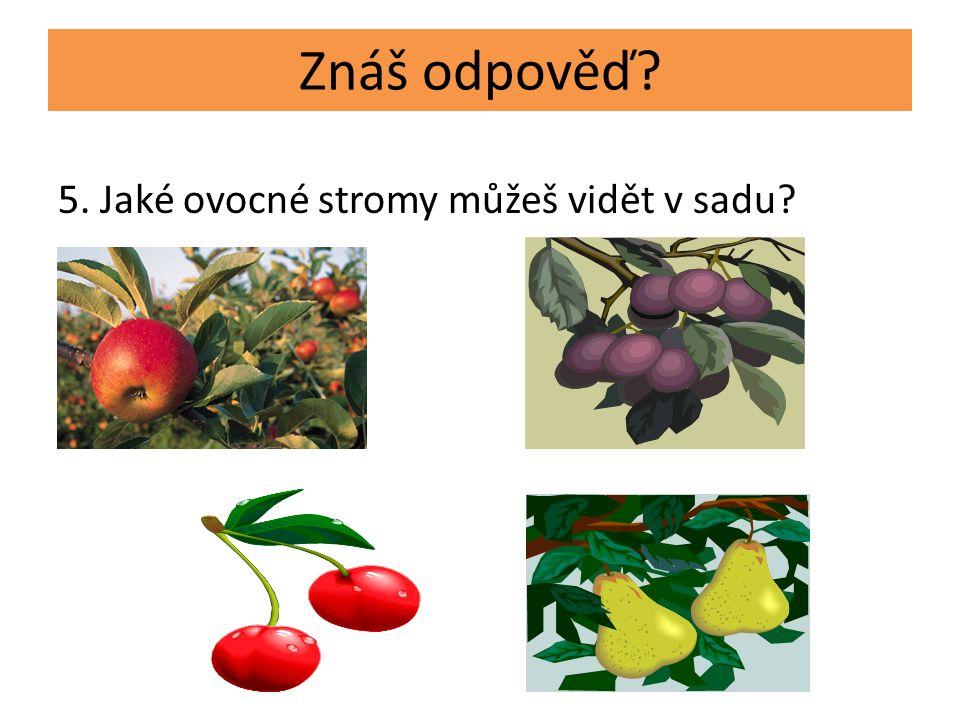 5. Jaké ovocné stromy můžeš vidět v sadu Znáš odpověď