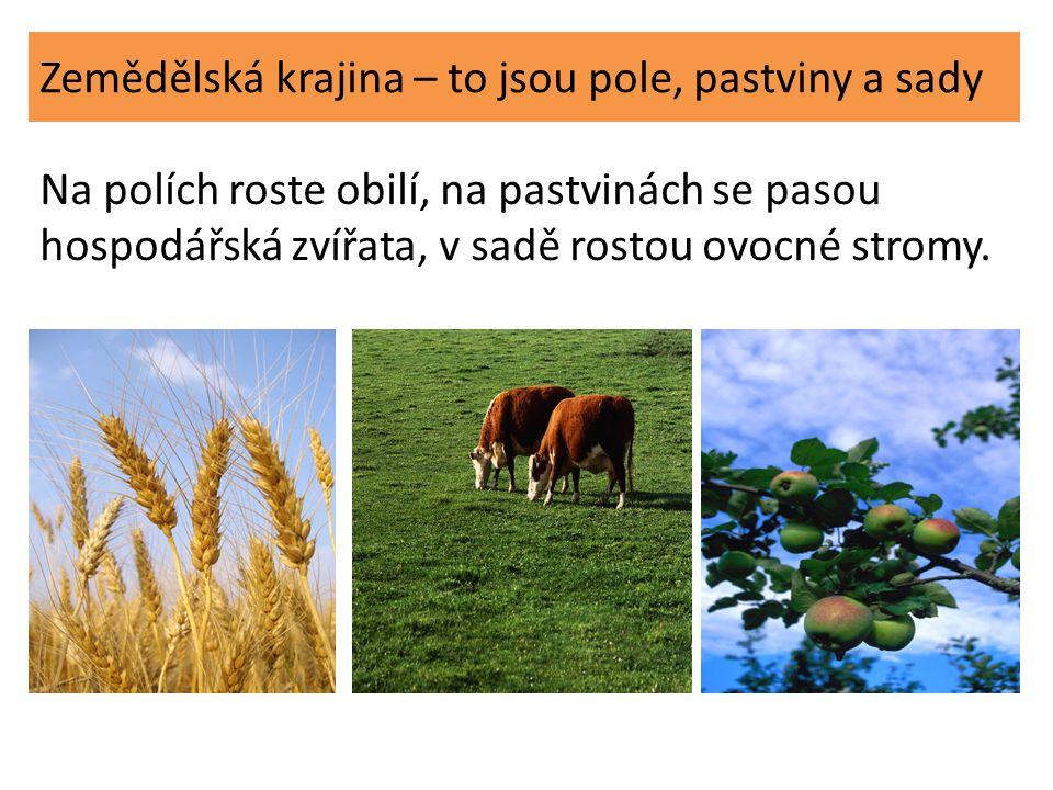 Zemědělská krajina – to jsou pole, pastviny a sady Na polích roste obilí, na pastvinách se pasou hospodářská zvířata, v sadě rostou ovocné stromy.