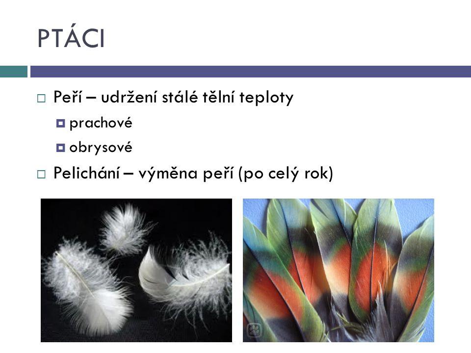 PTÁCI  Peří – udržení stálé tělní teploty  prachové  obrysové  Pelichání – výměna peří (po celý rok)