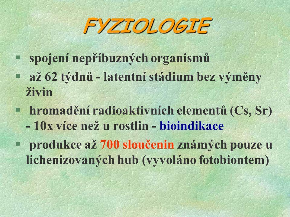 FYZIOLOGIE § spojení nepříbuzných organismů § až 62 týdnů - latentní stádium bez výměny živin § hromadění radioaktivních elementů (Cs, Sr) - 10x více než u rostlin - bioindikace § produkce až 700 sloučenin známých pouze u lichenizovaných hub (vyvoláno fotobiontem)