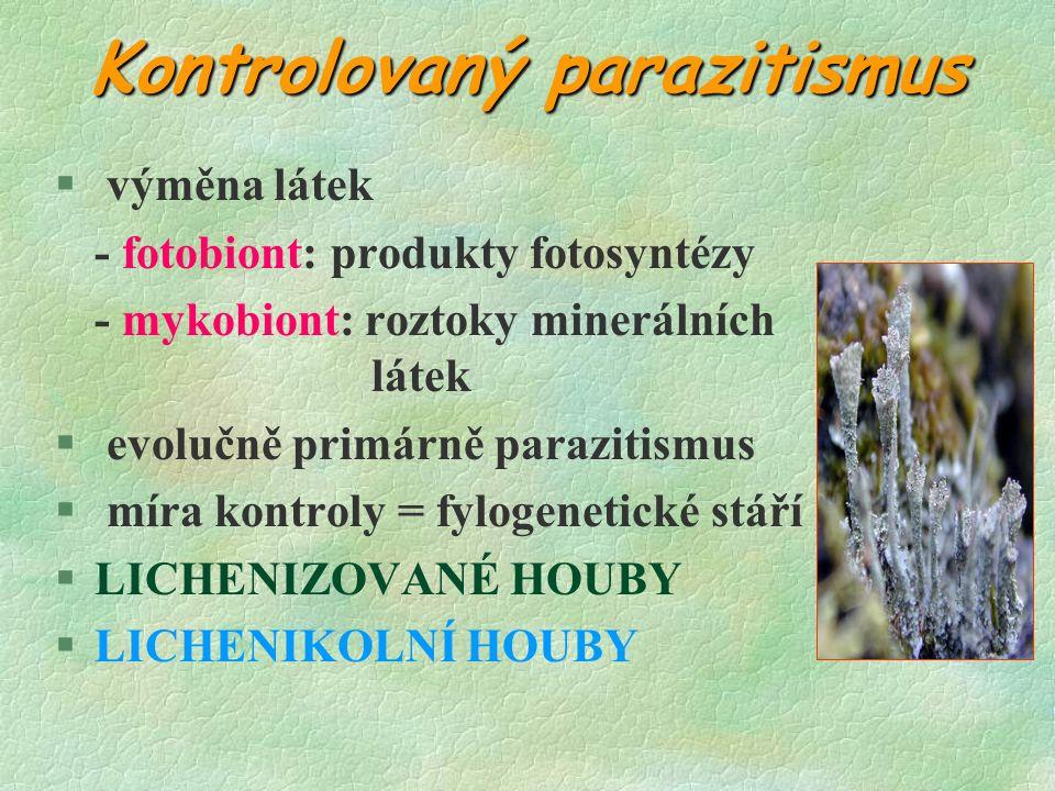 Kontrolovaný parazitismus § výměna látek - fotobiont: produkty fotosyntézy - mykobiont: roztoky minerálních látek § evolučně primárně parazitismus § míra kontroly = fylogenetické stáří §LICHENIZOVANÉ HOUBY §LICHENIKOLNÍ HOUBY