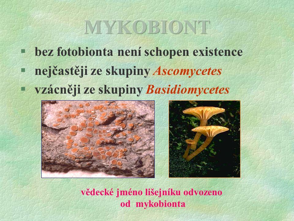 § bez fotobionta není schopen existence § nejčastěji ze skupiny Ascomycetes § vzácněji ze skupiny Basidiomycetes vědecké jméno lišejníku odvozeno od mykobionta