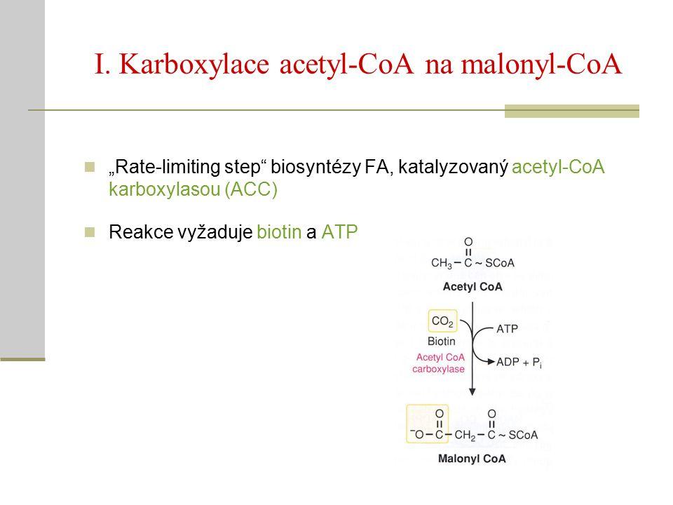 "I. Karboxylace acetyl-CoA na malonyl-CoA ""Rate-limiting step"" biosyntézy FA, katalyzovaný acetyl-CoA karboxylasou (ACC) Reakce vyžaduje biotin a ATP"