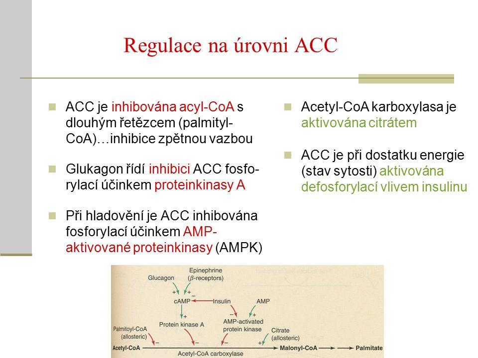 Regulace na úrovni ACC Acetyl-CoA karboxylasa je aktivována citrátem ACC je při dostatku energie (stav sytosti) aktivována defosforylací vlivem insulinu ACC je inhibována acyl-CoA s dlouhým řetězcem (palmityl- CoA)…inhibice zpětnou vazbou Glukagon řídí inhibici ACC fosfo- rylací účinkem proteinkinasy A Při hladovění je ACC inhibována fosforylací účinkem AMP- aktivované proteinkinasy (AMPK)