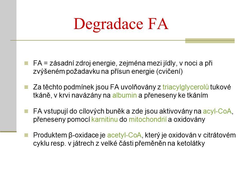 Degradace FA FA = zásadní zdroj energie, zejména mezi jídly, v noci a při zvýšeném požadavku na přísun energie (cvičení) Za těchto podmínek jsou FA uvolňovány z triacylglycerolů tukové tkáně, v krvi navázány na albumin a přeneseny ke tkáním FA vstupují do cílových buněk a zde jsou aktivovány na acyl-CoA, přeneseny pomocí karnitinu do mitochondrií a oxidovány Produktem β-oxidace je acetyl-CoA, který je oxidován v citrátovém cyklu resp.