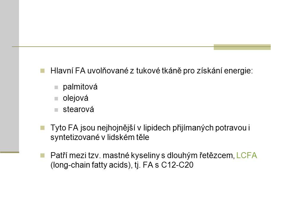 Hlavní FA uvolňované z tukové tkáně pro získání energie: palmitová olejová stearová Tyto FA jsou nejhojnější v lipidech přijímaných potravou i syntetizované v lidském těle Patří mezi tzv.