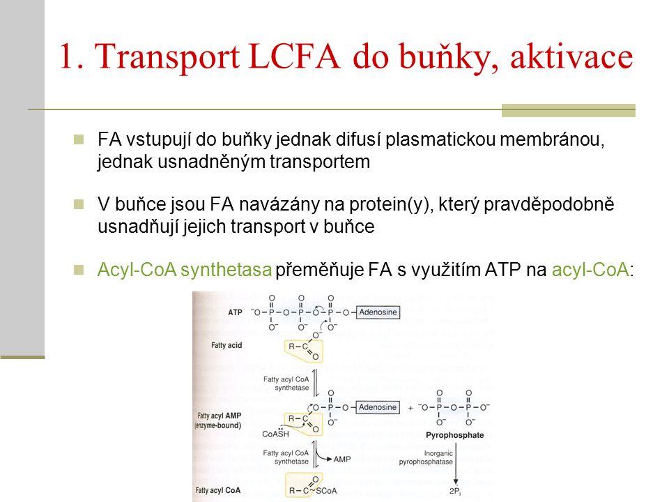 1. Transport LCFA do buňky, aktivace FA vstupují do buňky jednak difusí plasmatickou membránou, jednak usnadněným transportem V buňce jsou FA navázány