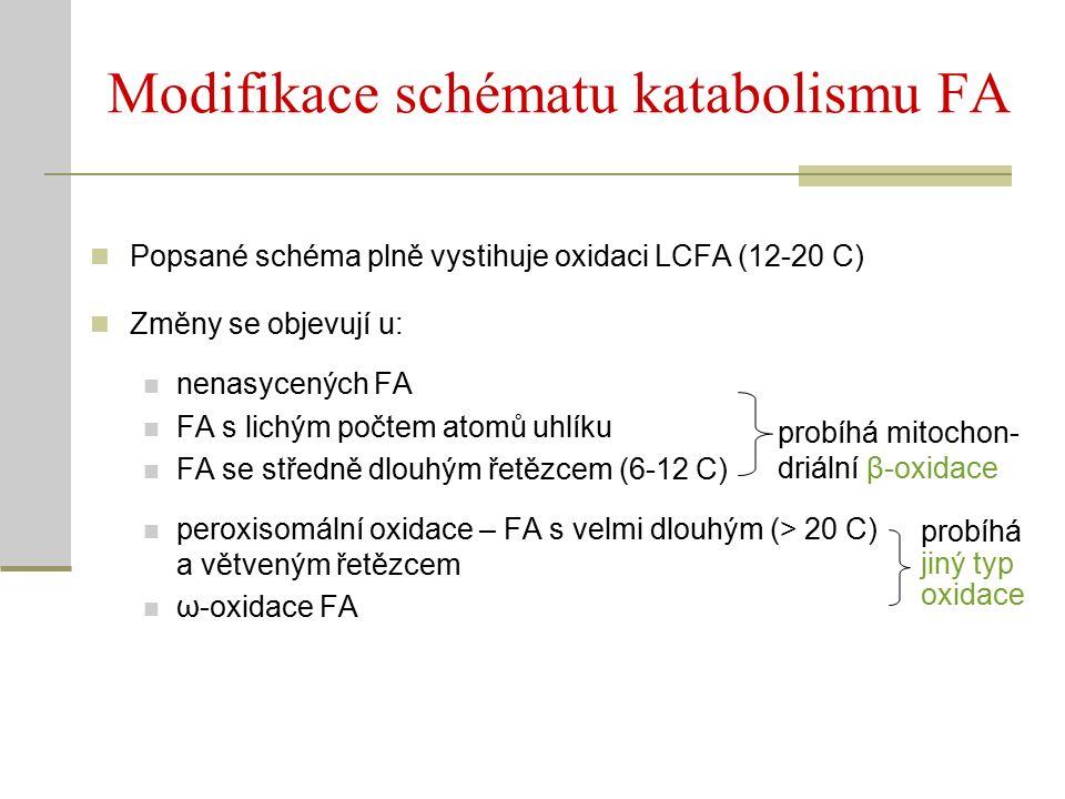 Modifikace schématu katabolismu FA Popsané schéma plně vystihuje oxidaci LCFA (12-20 C) Změny se objevují u: nenasycených FA FA s lichým počtem atomů uhlíku FA se středně dlouhým řetězcem (6-12 C) peroxisomální oxidace – FA s velmi dlouhým (> 20 C) a větveným řetězcem ω-oxidace FA probíhá mitochon- driální β-oxidace probíhá jiný typ oxidace