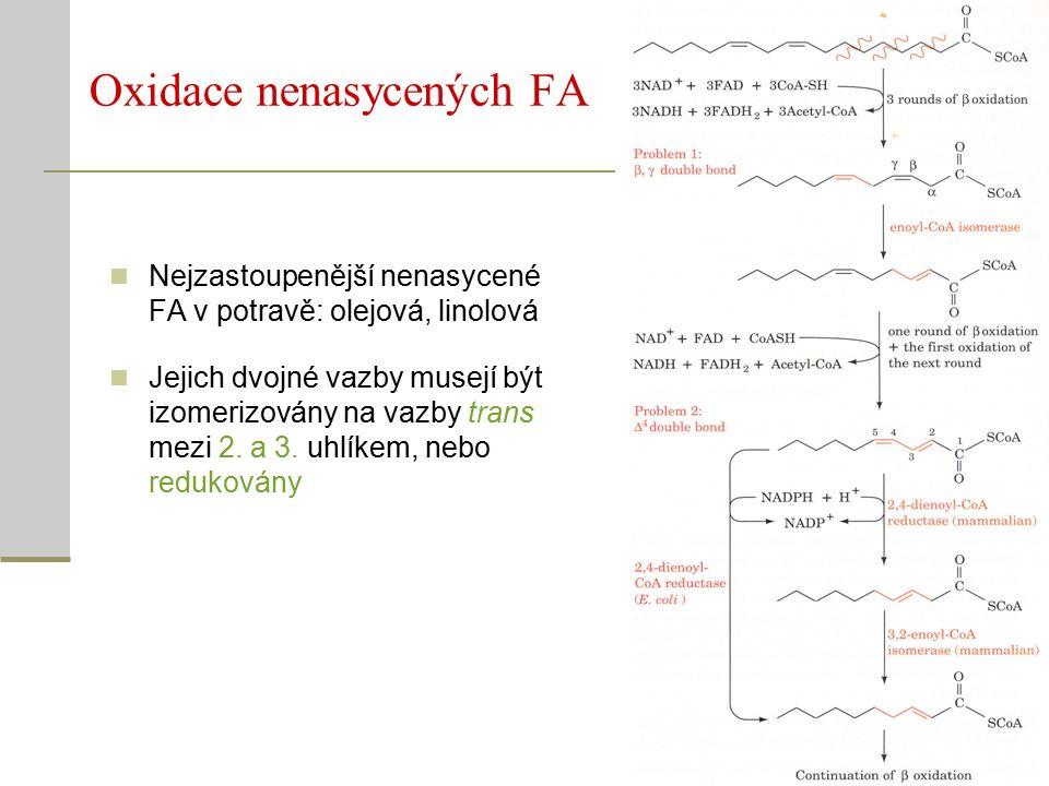 Oxidace nenasycených FA Nejzastoupenější nenasycené FA v potravě: olejová, linolová Jejich dvojné vazby musejí být izomerizovány na vazby trans mezi 2.