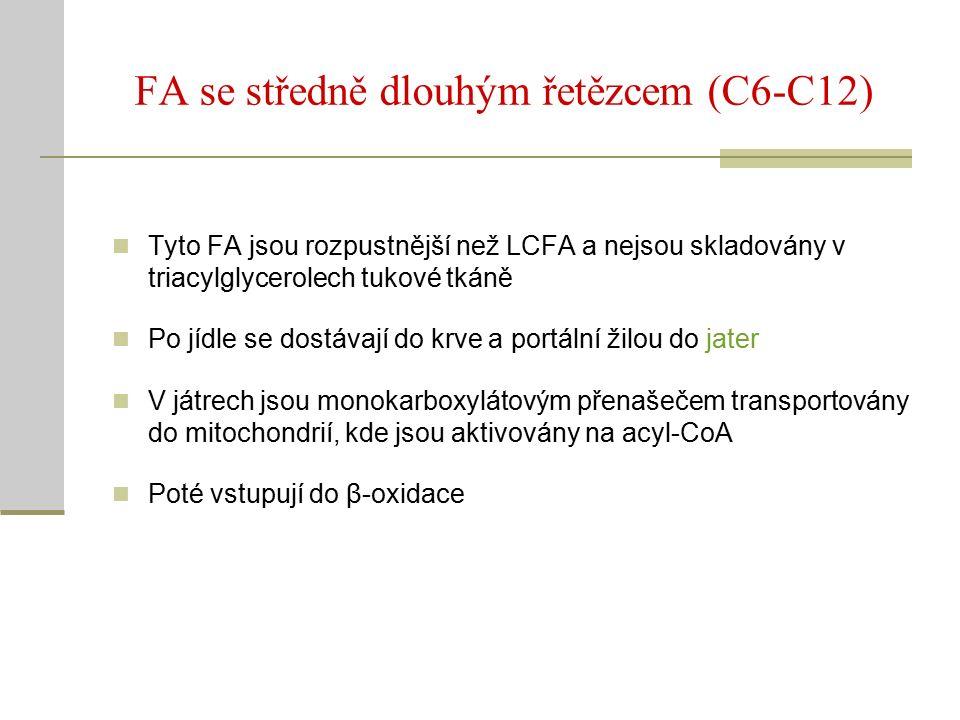 FA se středně dlouhým řetězcem (C6-C12) Tyto FA jsou rozpustnější než LCFA a nejsou skladovány v triacylglycerolech tukové tkáně Po jídle se dostávají do krve a portální žilou do jater V játrech jsou monokarboxylátovým přenašečem transportovány do mitochondrií, kde jsou aktivovány na acyl-CoA Poté vstupují do β-oxidace