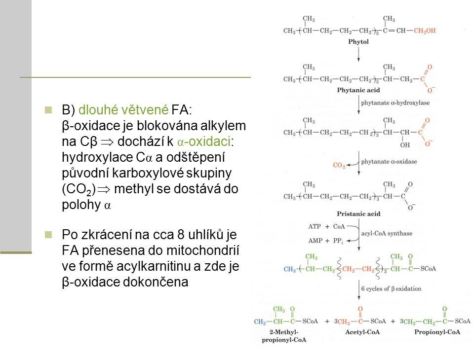 B) dlouhé větvené FA: β-oxidace je blokována alkylem na Cβ  dochází k α -oxidaci: hydroxylace C α a odštěpení původní karboxylové skupiny (CO 2 )  methyl se dostává do polohy α Po zkrácení na cca 8 uhlíků je FA přenesena do mitochondrií ve formě acylkarnitinu a zde je β-oxidace dokončena