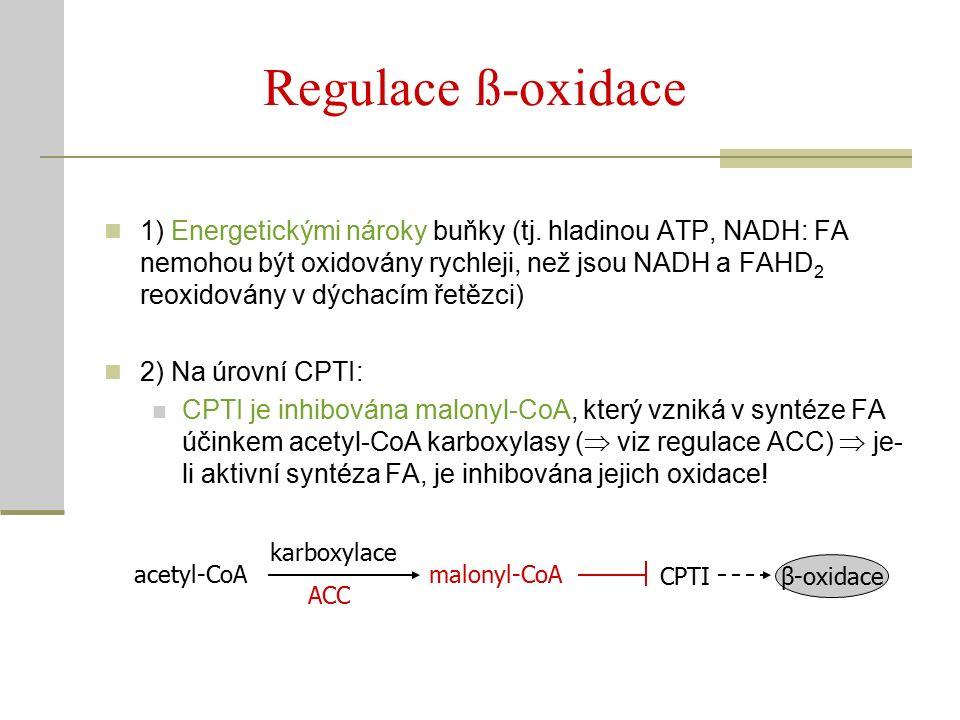 Regulace ß-oxidace 1) Energetickými nároky buňky (tj.