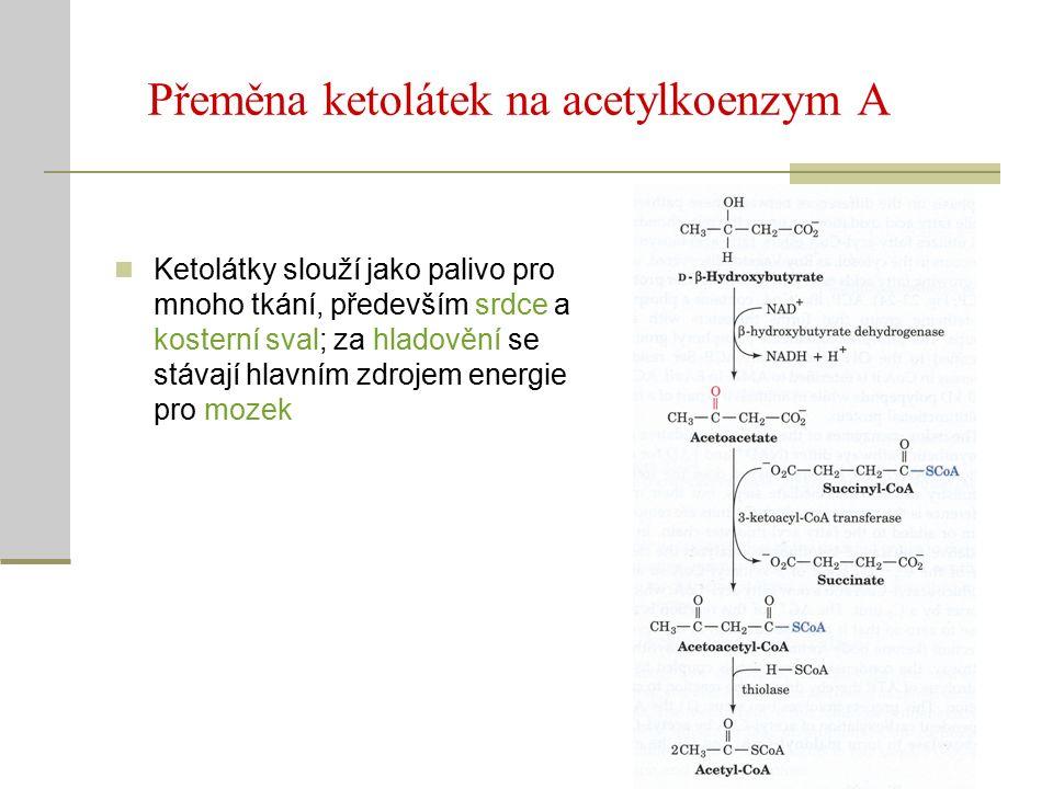 Přeměna ketolátek na acetylkoenzym A Ketolátky slouží jako palivo pro mnoho tkání, především srdce a kosterní sval; za hladovění se stávají hlavním zdrojem energie pro mozek