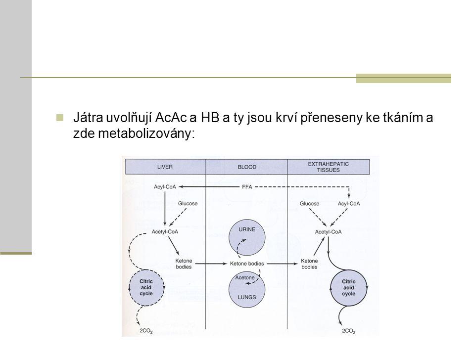 Játra uvolňují AcAc a HB a ty jsou krví přeneseny ke tkáním a zde metabolizovány: