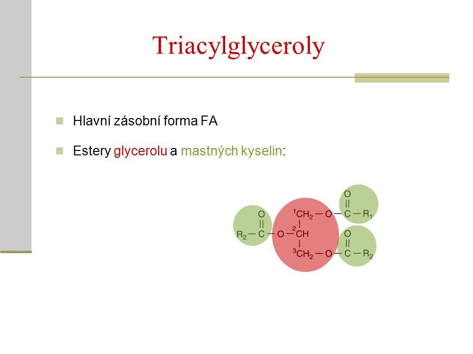 Triacylglyceroly Hlavní zásobní forma FA Estery glycerolu a mastných kyselin: