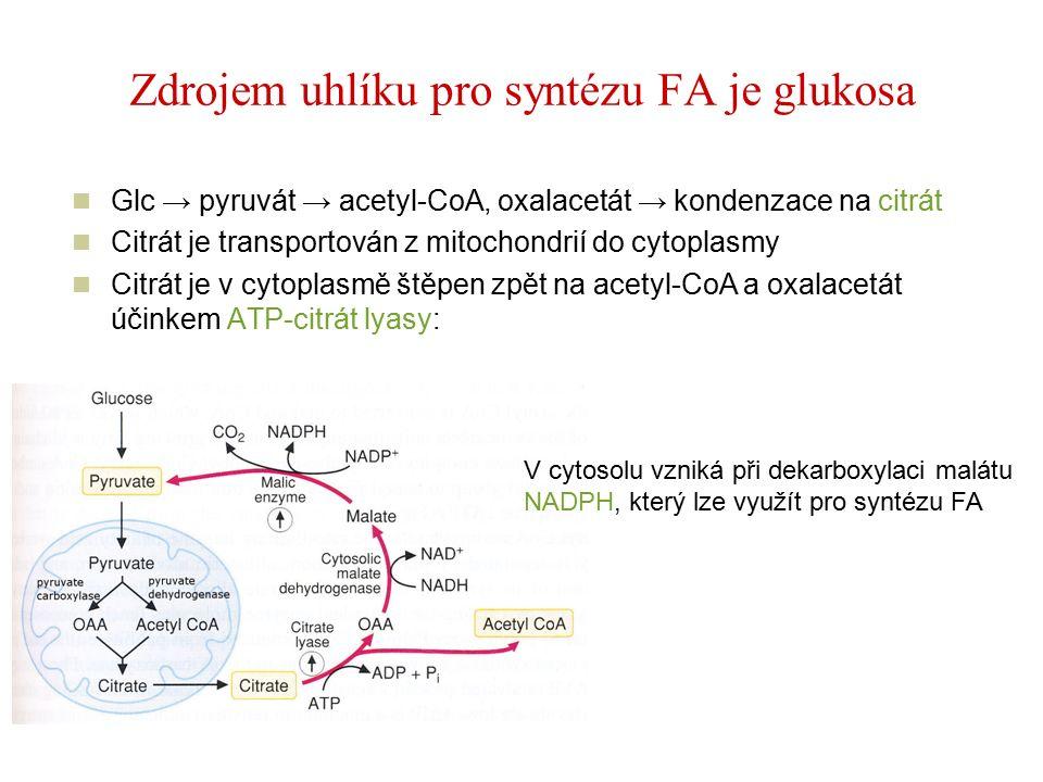 Zdrojem uhlíku pro syntézu FA je glukosa Glc → pyruvát → acetyl-CoA, oxalacetát → kondenzace na citrát Citrát je transportován z mitochondrií do cytoplasmy Citrát je v cytoplasmě štěpen zpět na acetyl-CoA a oxalacetát účinkem ATP-citrát lyasy: V cytosolu vzniká při dekarboxylaci malátu NADPH, který lze využít pro syntézu FA
