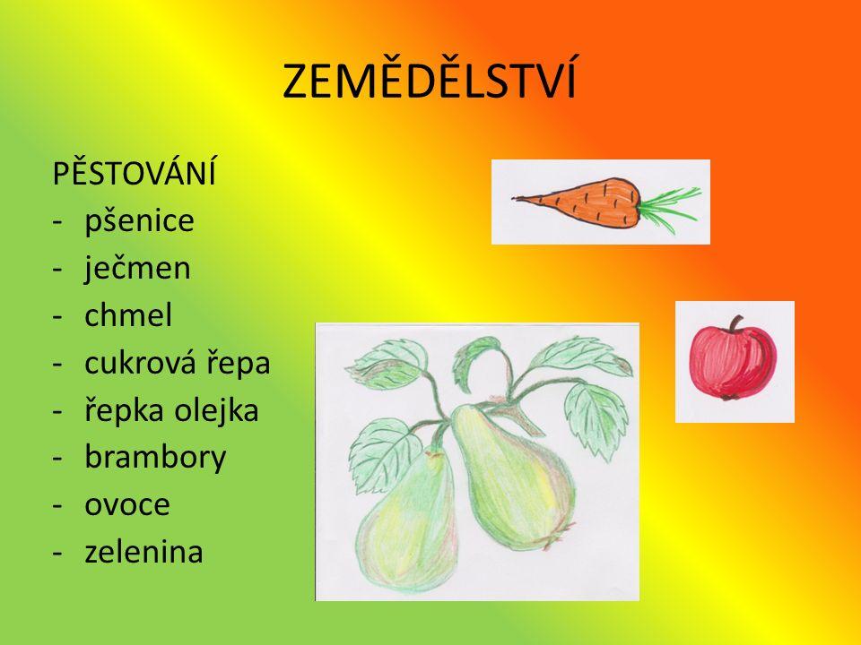 ZEMĚDĚLSTVÍ PĚSTOVÁNÍ -pšenice -ječmen -chmel -cukrová řepa -řepka olejka -brambory -ovoce -zelenina