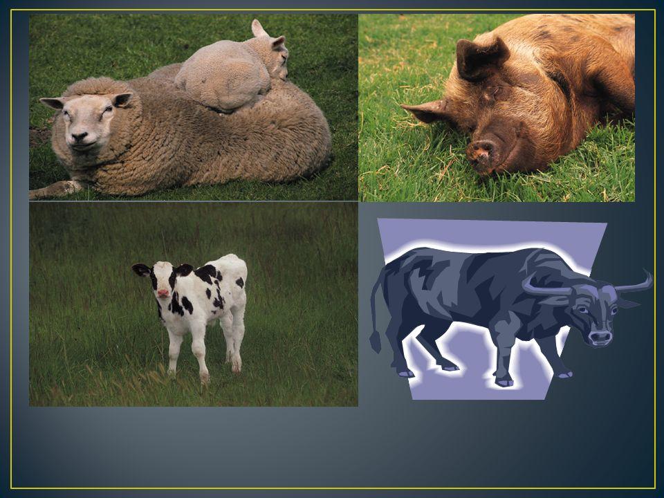 Vysoká – jelen, daněk, muflon, srnec Nízká – zajíc, divoký králík Pernatá – bažant, koroptev Černá – divoké prase
