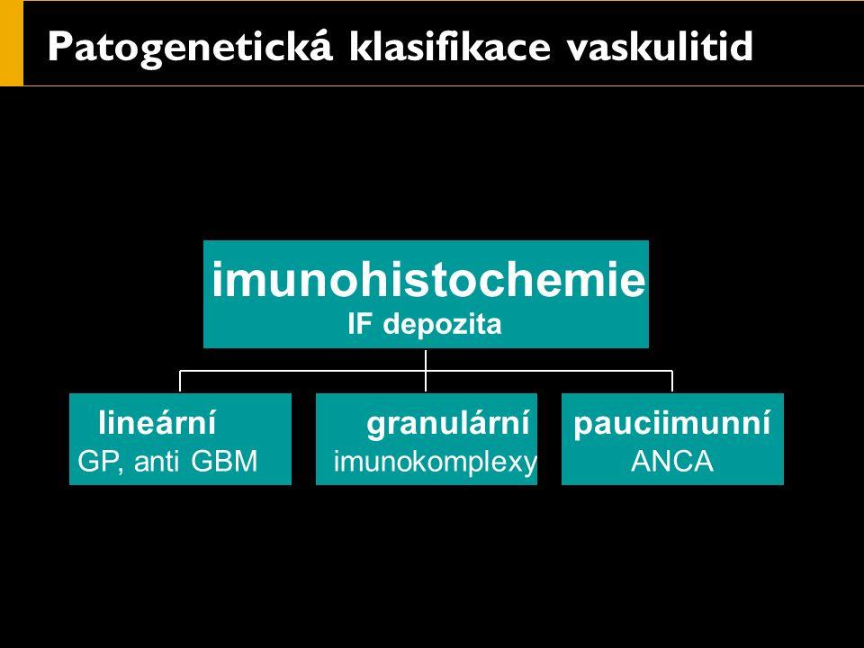 Patogenetick á klasifikace vaskulitid lineární GP, anti GBM granulární imunokomplexy pauciimunní ANCA imunohistochemie IF depozita