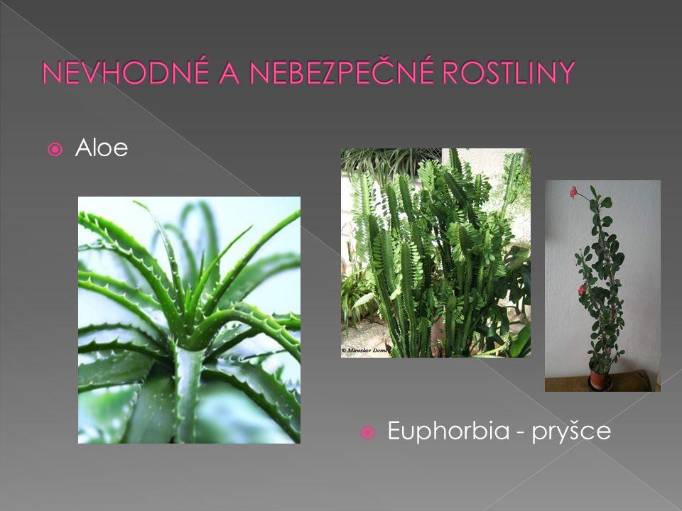  Aloe  Euphorbia - pryšce