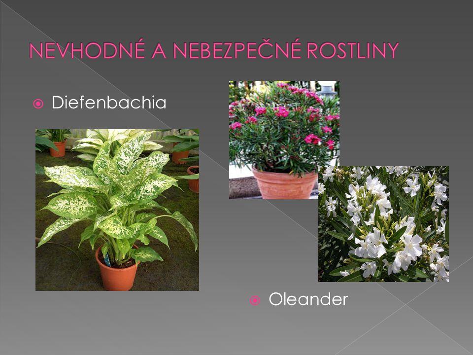  Diefenbachia  Oleander