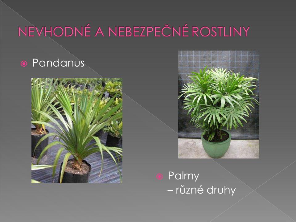  Pandanus  Palmy – různé druhy