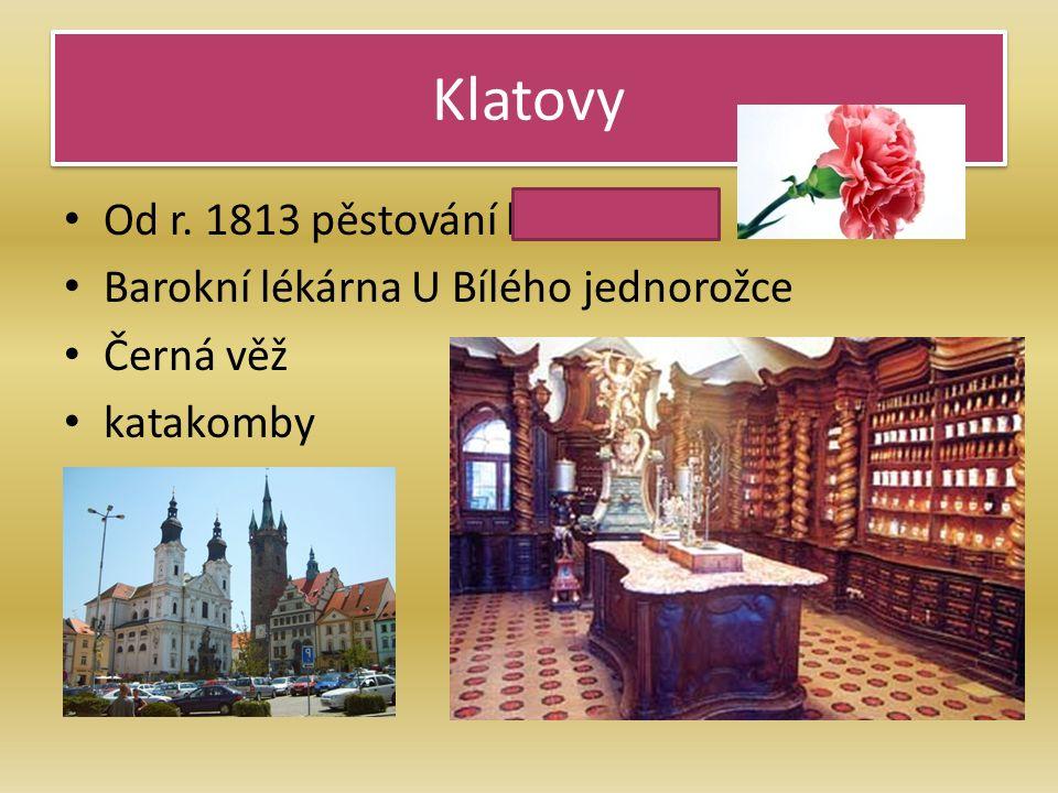 Klatovy Od r. 1813 pěstování karafiátů Barokní lékárna U Bílého jednorožce Černá věž katakomby