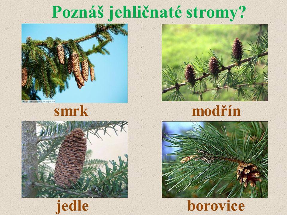 Poznáš jehličnaté stromy? smrkmodřín jedleborovice