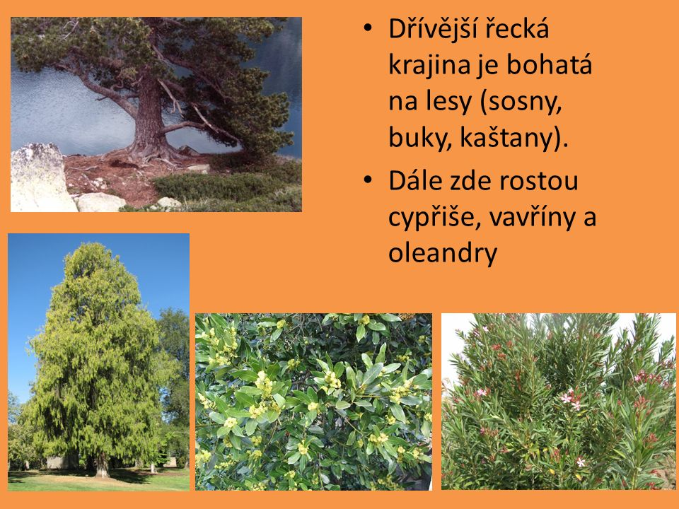 Dřívější řecká krajina je bohatá na lesy (sosny, buky, kaštany). Dále zde rostou cypřiše, vavříny a oleandry