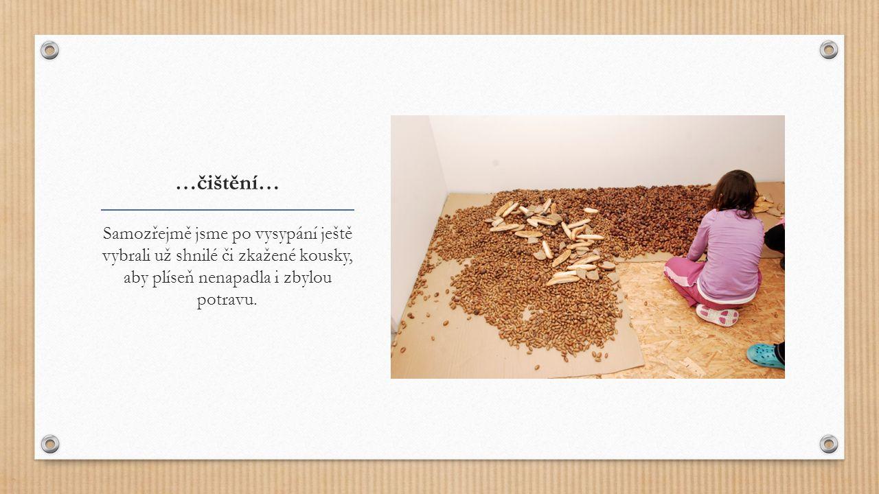 …čištění… Samozřejmě jsme po vysypání ještě vybrali už shnilé či zkažené kousky, aby plíseň nenapadla i zbylou potravu.