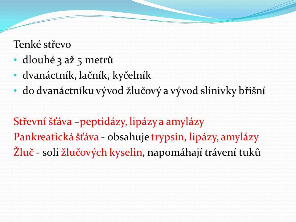 Tenké střevo dlouhé 3 až 5 metrů dvanáctník, lačník, kyčelník do dvanáctníku vývod žlučový a vývod slinivky břišní Střevní šťáva –peptidázy, lipázy a amylázy Pankreatická šťáva - obsahuje trypsin, lipázy, amylázy Žluč - soli žlučových kyselin, napomáhají trávení tuků