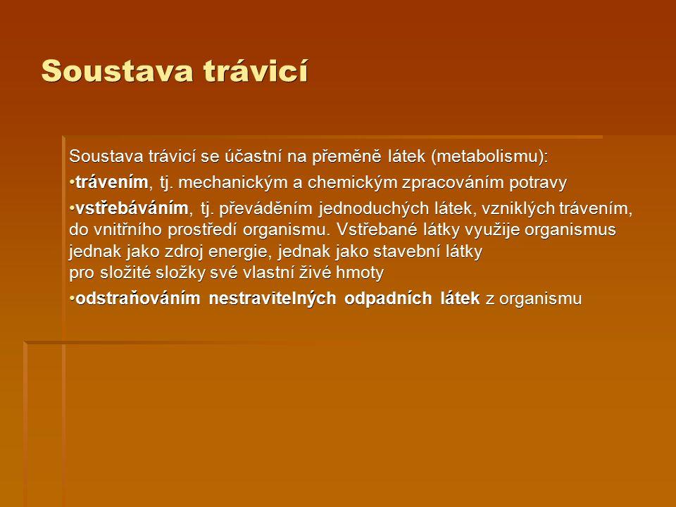 Soustava trávicí Soustava trávicí se účastní na přeměně látek (metabolismu): trávením, tj. mechanickým a chemickým zpracováním potravy trávením, tj. m