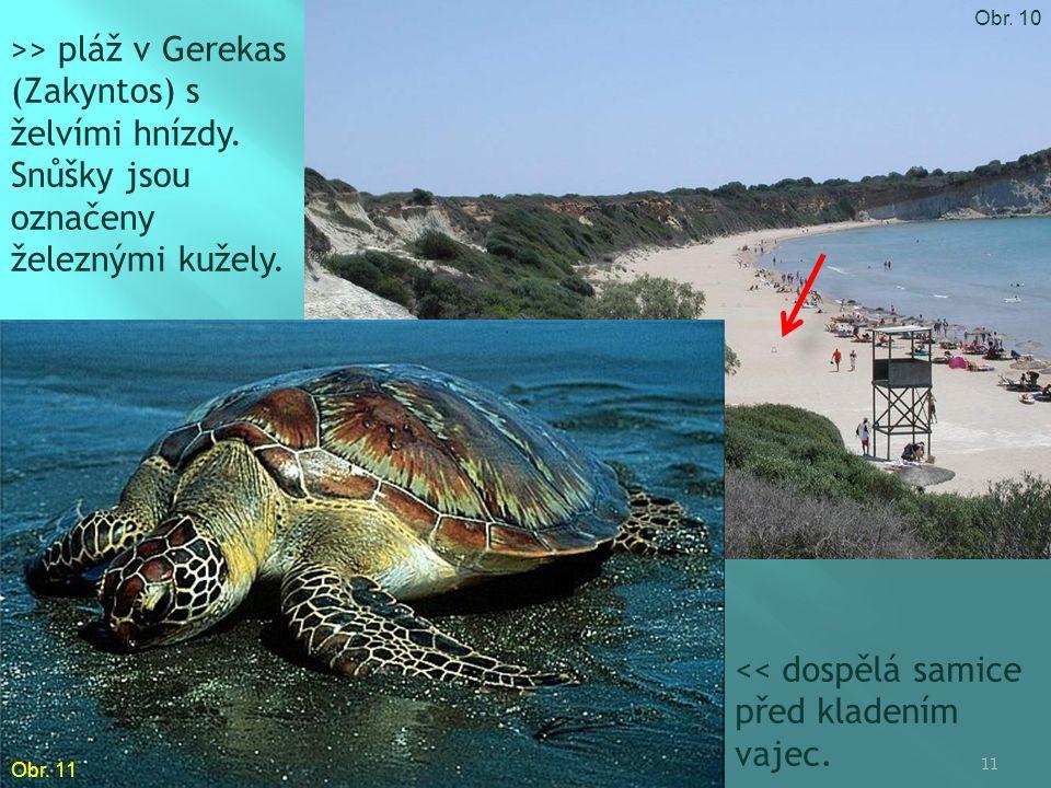 >> pláž v Gerekas (Zakyntos) s želvími hnízdy. Snůšky jsou označeny železnými kužely.