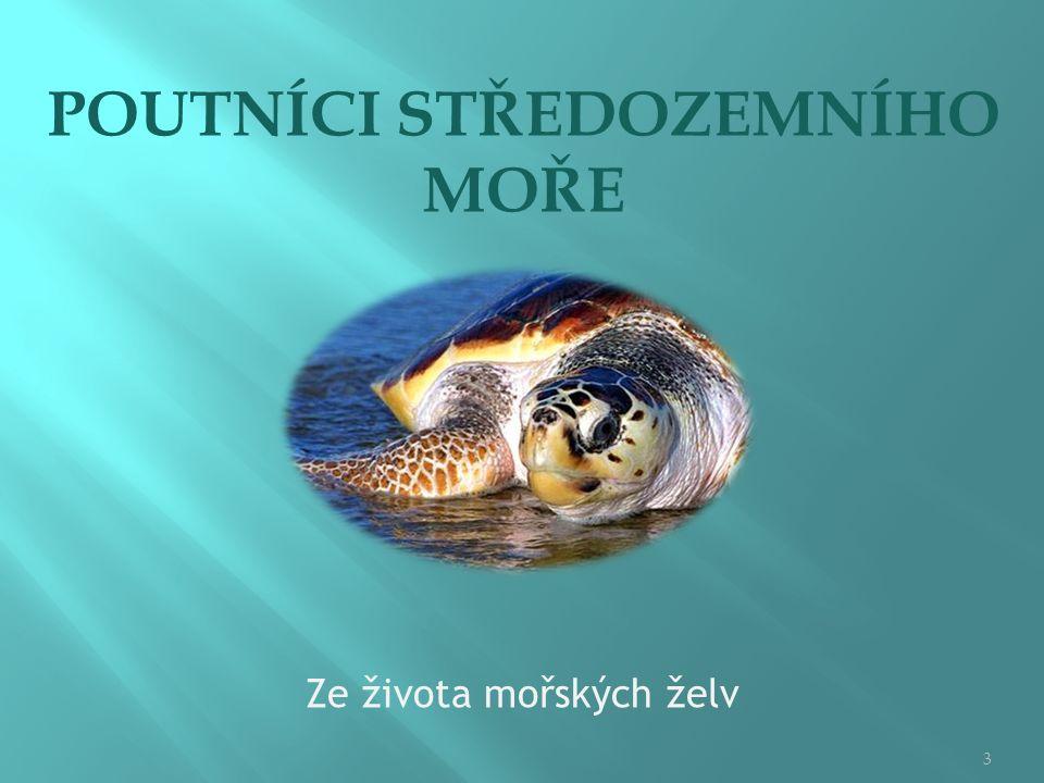  Středozemní moře je domovem několika druhů mořských plazů z řádu želv (Chelonia), který zahrnuje na 305 recentních druhů.