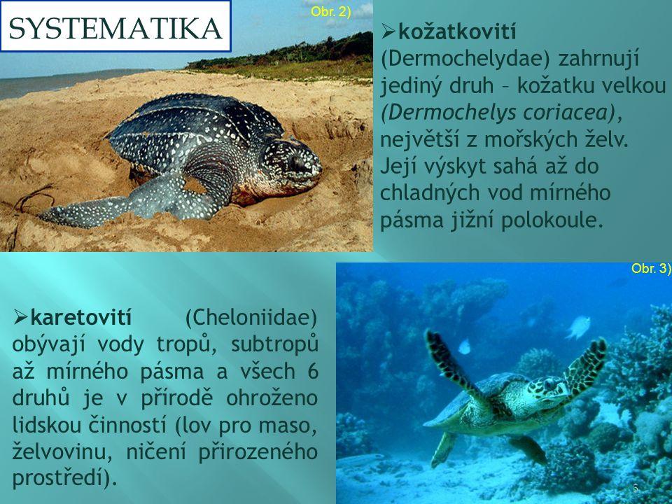  karetovití (Cheloniidae) obývají vody tropů, subtropů až mírného pásma a všech 6 druhů je v přírodě ohroženo lidskou činností (lov pro maso, želvovinu, ničení přirozeného prostředí).