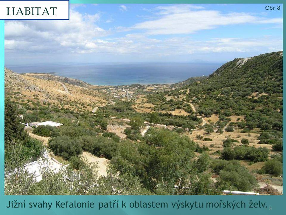 Jižní svahy Kefalonie patří k oblastem výskytu mořských želv. HABITAT 8 Obr. 8