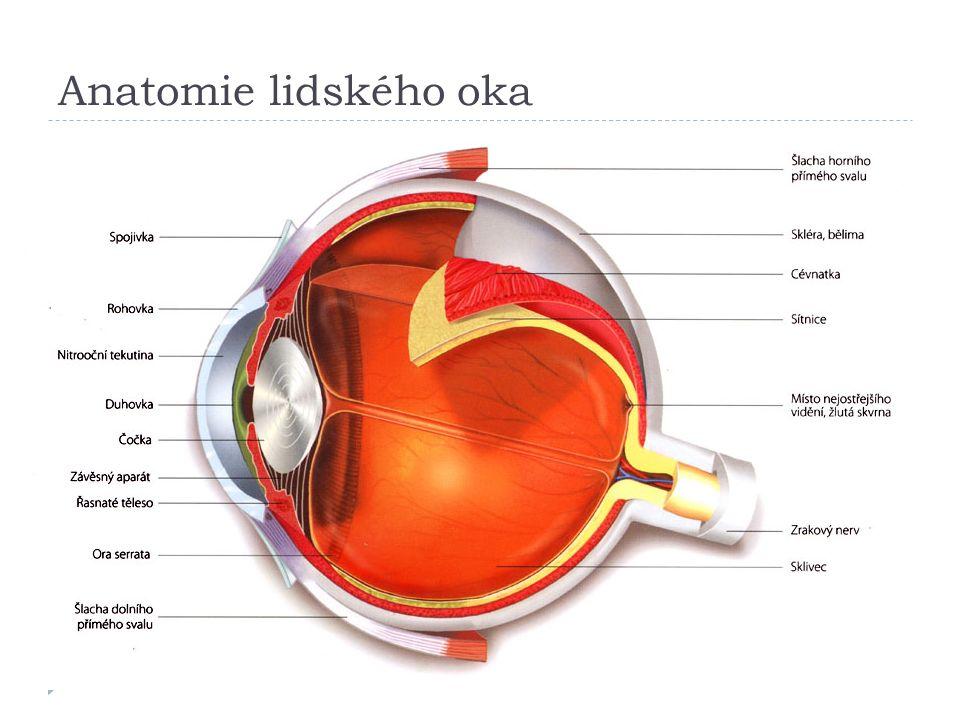 Anatomie lidského oka