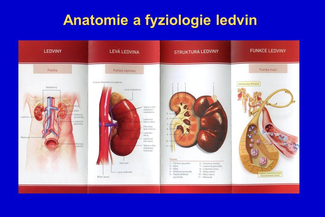 Anatomie a fyziologie ledvin