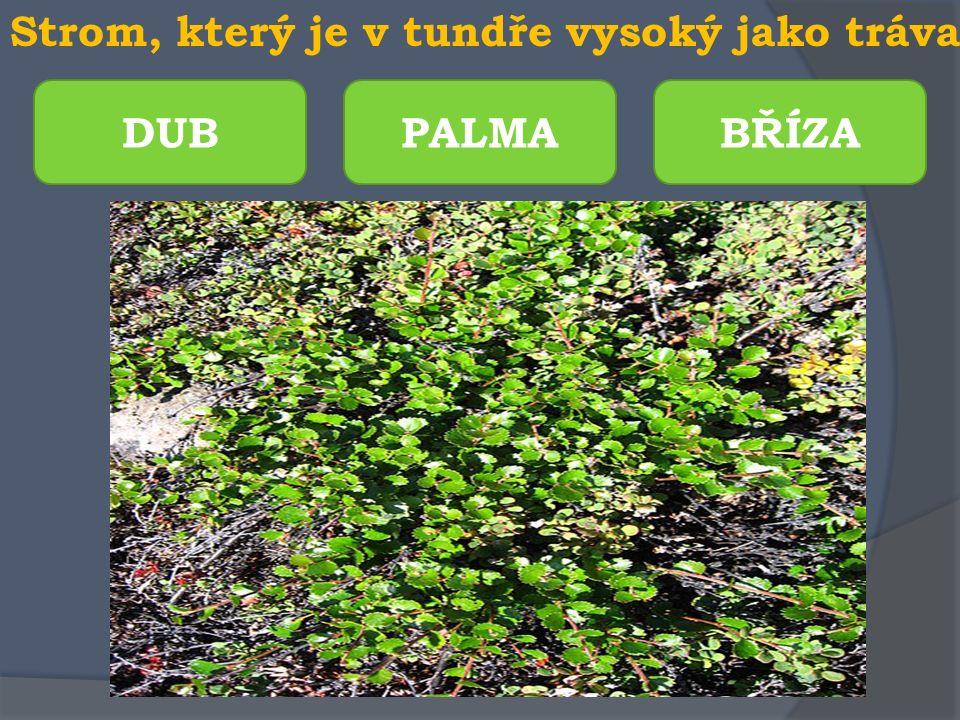Oblast mezi tundrou a tajgou PUSTINA LESOTUNDRA BAŽINA