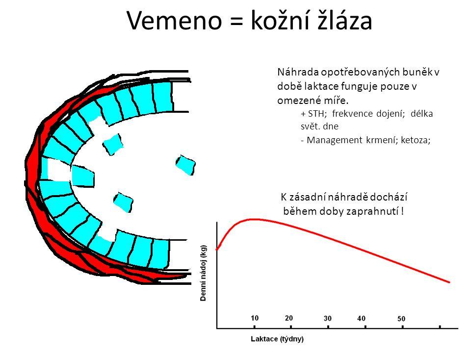 Náhrada opotřebovaných buněk v době laktace funguje pouze v omezené míře.
